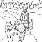 Coloring page dogs sled race