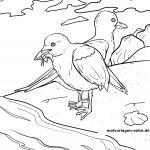 Coloring page gulls on the sea for coloring