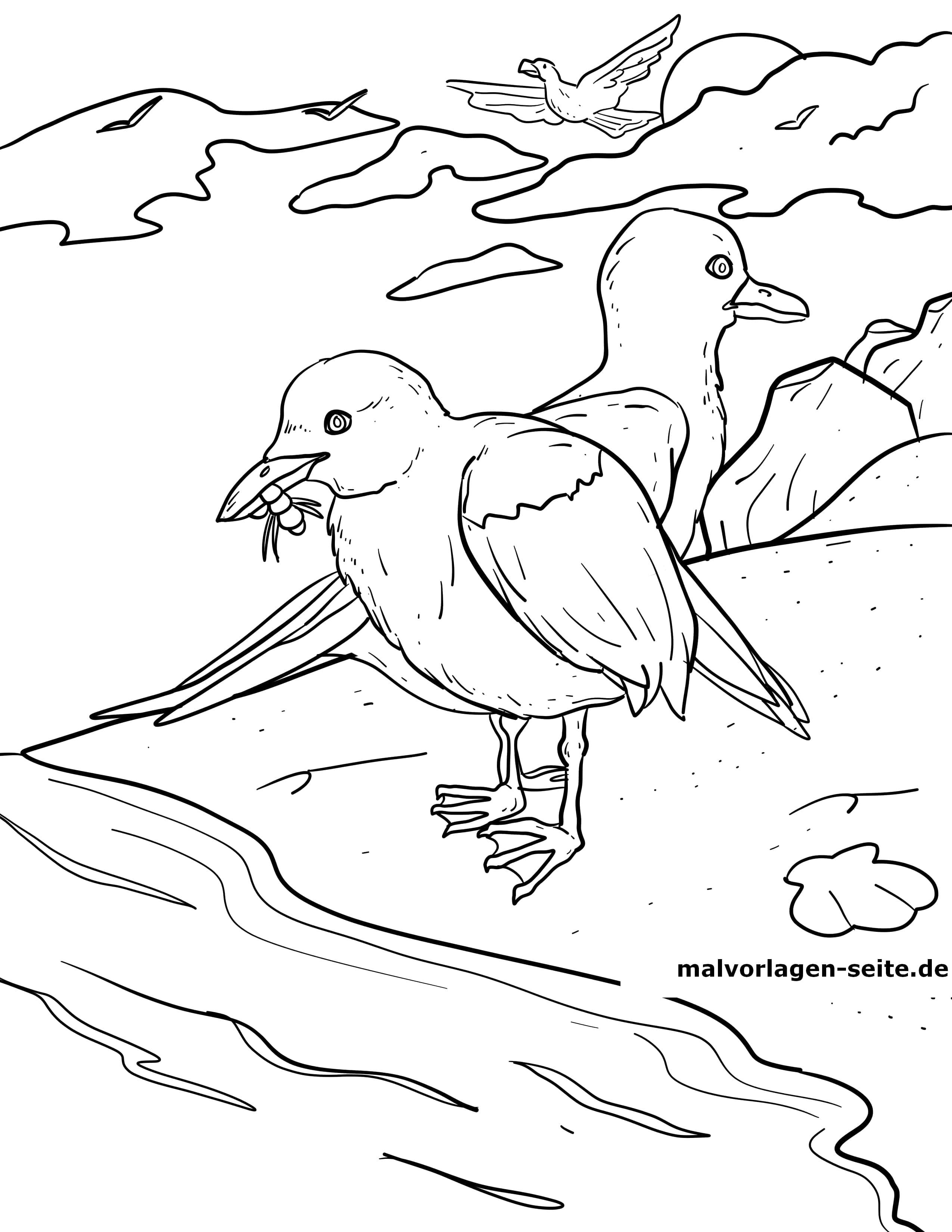 Malvorlage Möwen Vögel Tiere