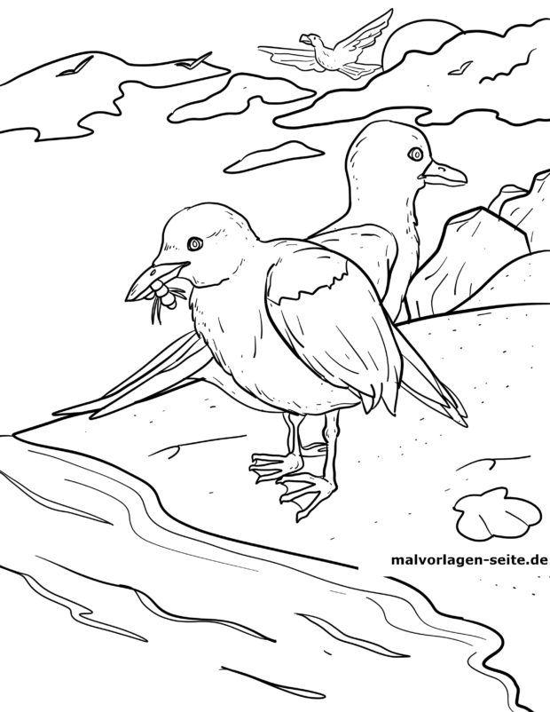 Bojanje stranice galebovi