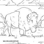 Coloriage bison | Faune