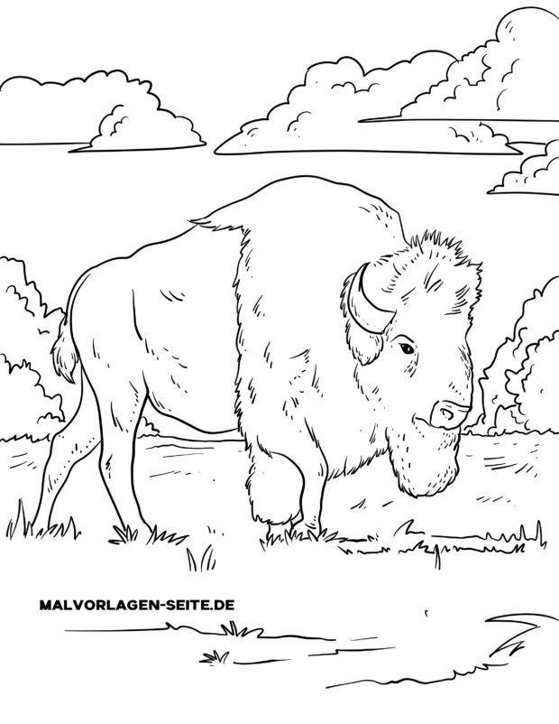 Malvorlage Bison