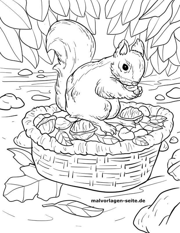 Malvorlage Eichhörnchen auf Futtersuche