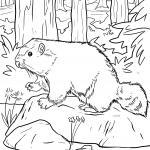 Coloring page groundhog for coloring