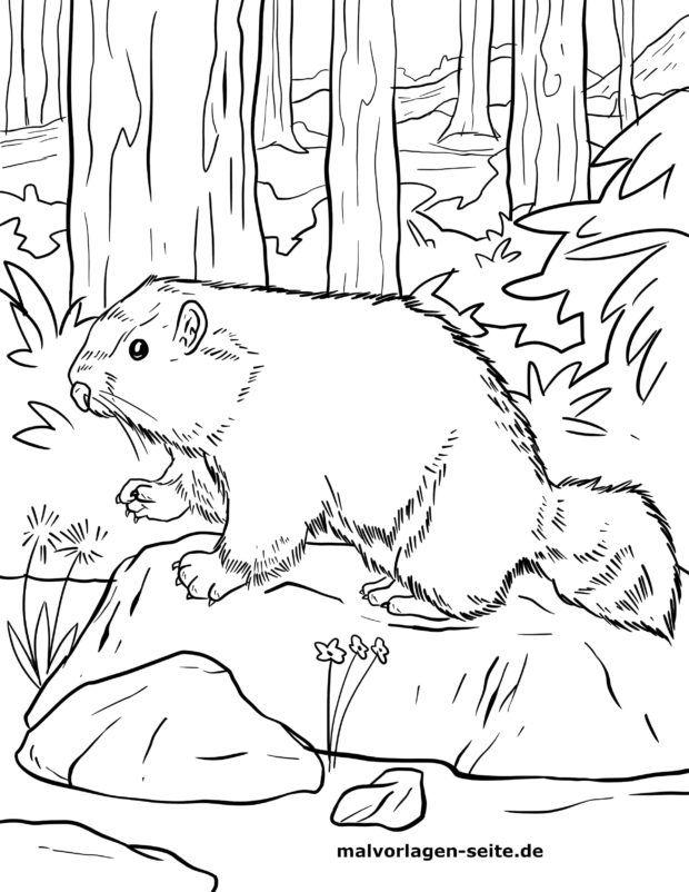 საღებარი გვერდი marmot