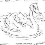 Размалёўка лебедзя | птушкі