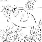 Malvorlage Robbe im Meer zum Ausmalen