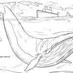 Malvorlage Blauwal | Tiere im Wasser