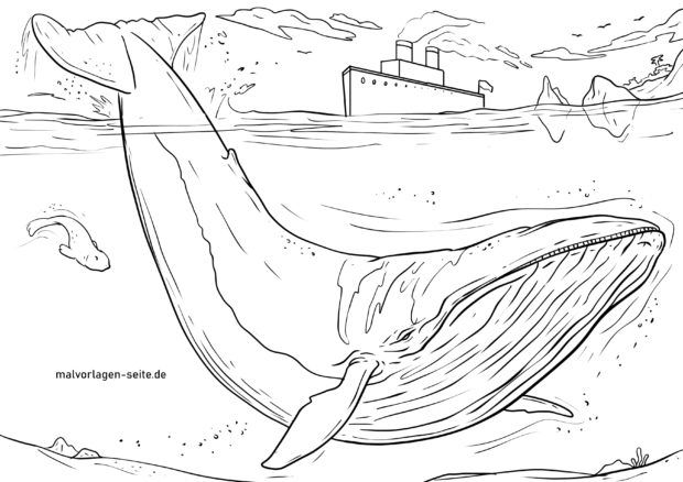 - Coloring Page Blue Whale Whale Animals - Free Coloring Pages