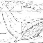 Malvorlage Blauwal zum Ausmalen