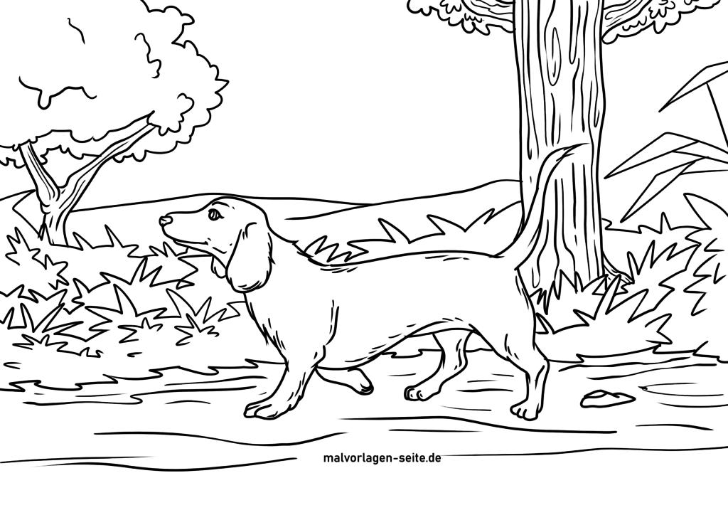 malvorlage dackel  hunde  kostenlose ausmalbilder