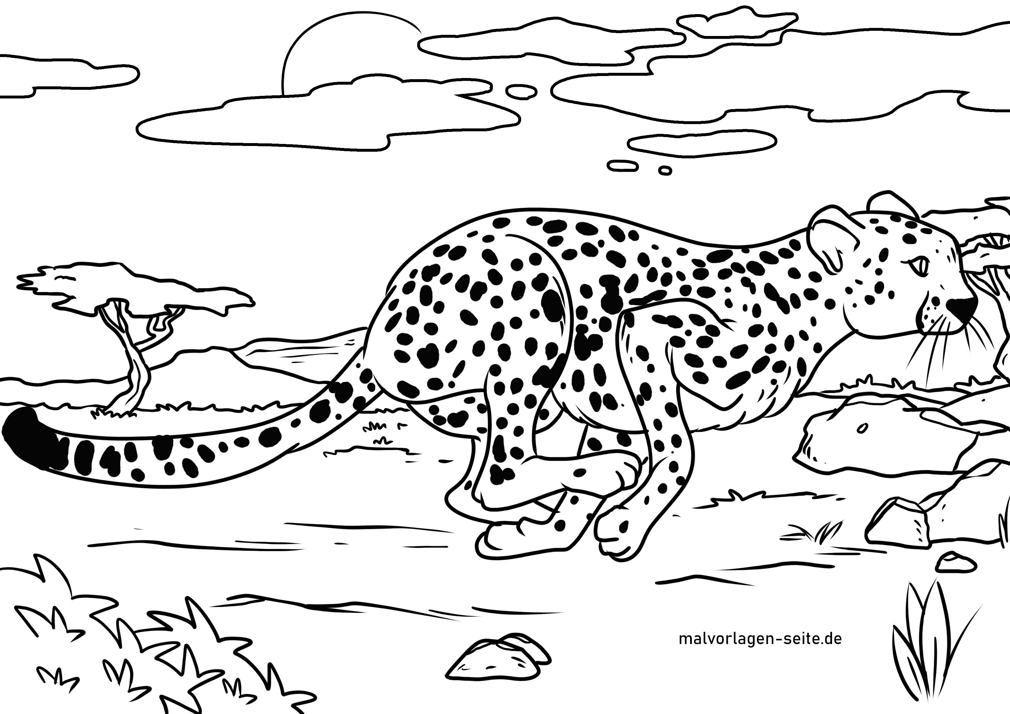 Malvorlage Gepard  Tiere - Kostenlose Ausmalbilder