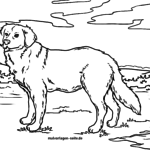Coloring page Golden Retriever | dogs