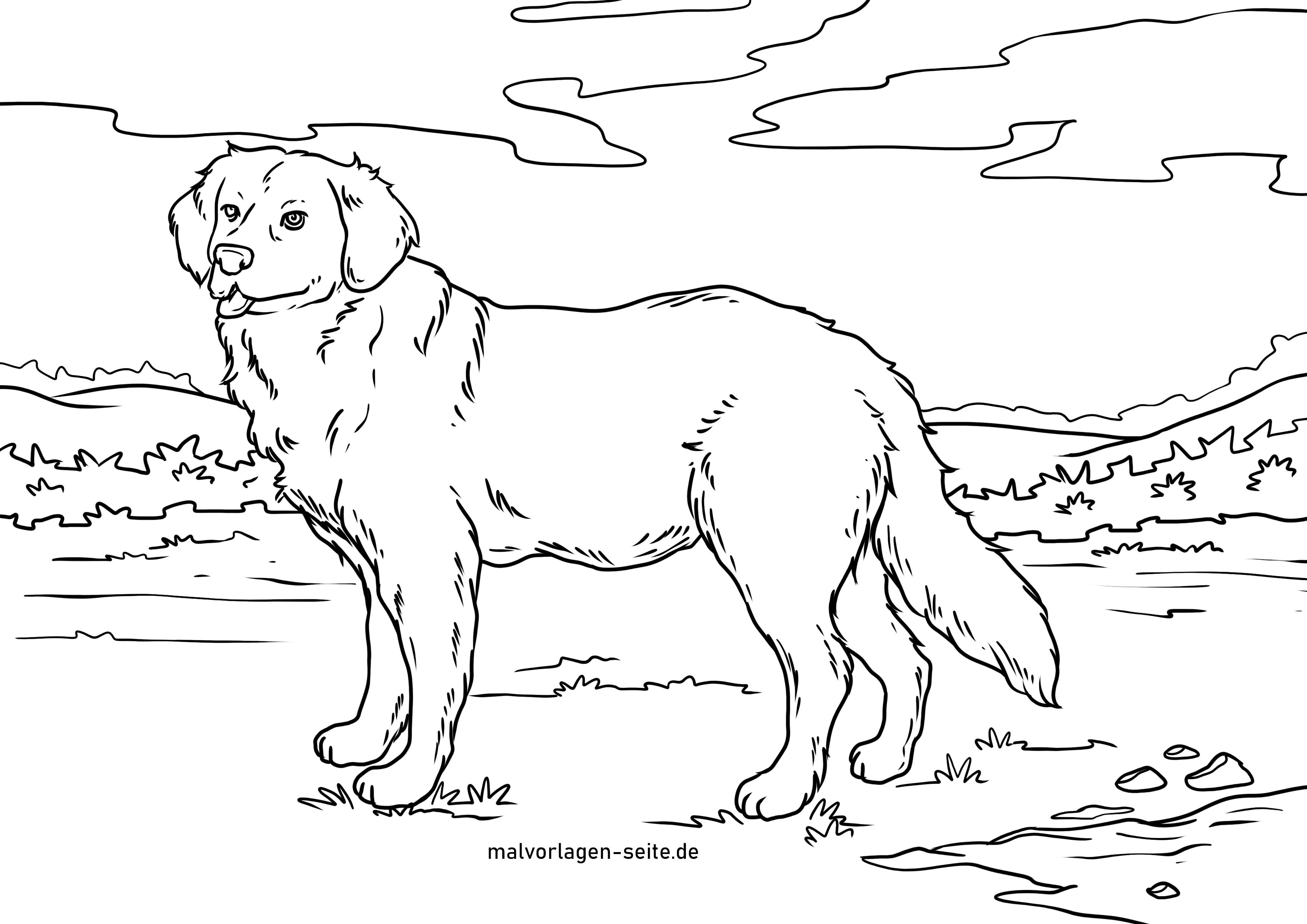 Malvorlage Golden Retriever  Hunde - Kostenlose Ausmalbilder
