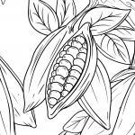 Coloring page cocoa / cocoa beans for coloring