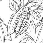 Malvorlage Kakaobohnen / Kakao | Trinken