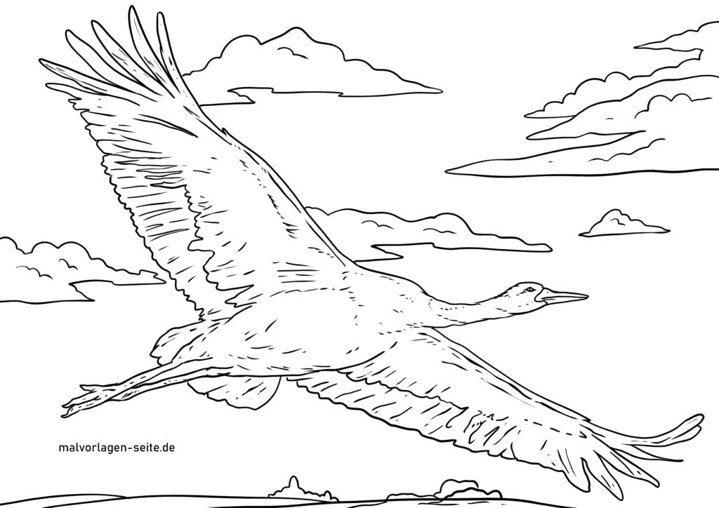 kostenlose malvorlagen vögel zum herunterladen ausdrucken
