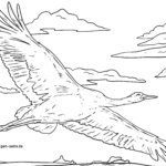 Coloring page crane flying in the sky for coloring