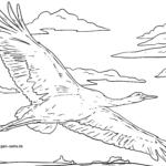Malvorlage Kranich | Vögel Tiere