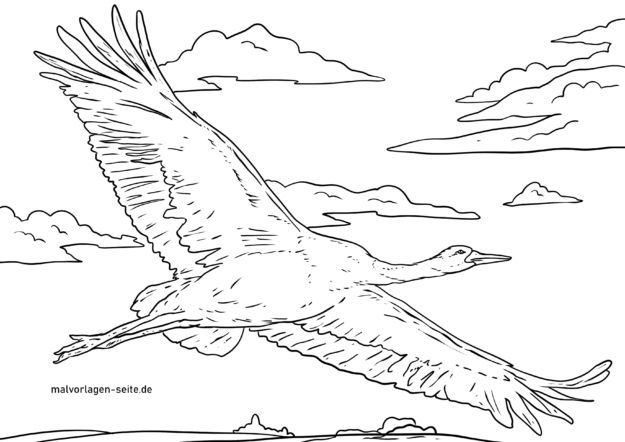 Coloring page crane flying