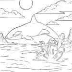 Malvorlage Orca / Schwertwal | Tiere im Wasser