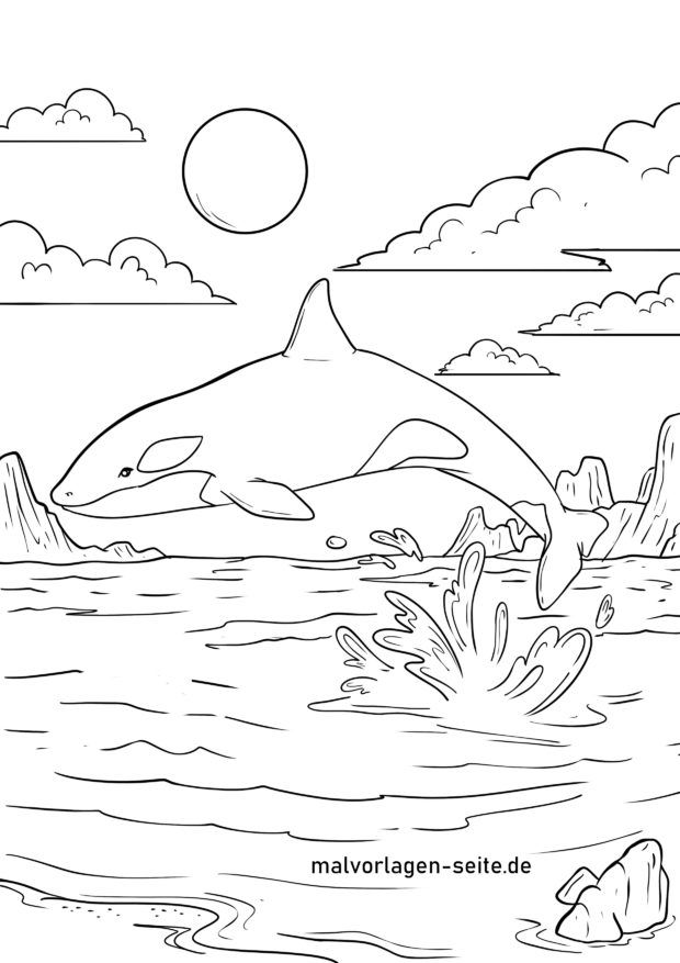 Coloring page Orca / Orca