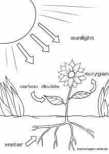 Photosynthesis English