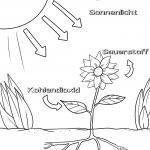 Samfurin photosynthesis tare da alamar Jamus don canza launi