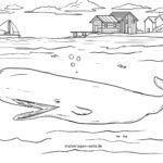 Stranica bojanje kitova sperme | Kitovi