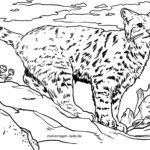 Coloring page Lynx