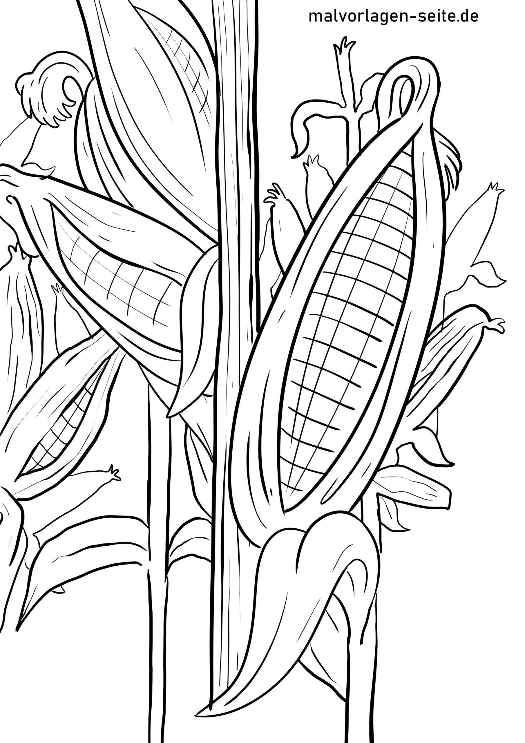 malvorlage mais  pflanzen  ausmalbilder kostenlos