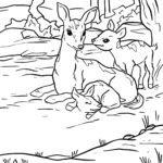 Ausmalbilder Tiere im Wald - Malvorlage Rehkitz zum Ausmalen