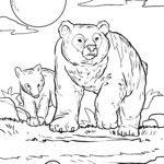 Malvorlage Bär | Tiere
