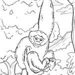 Coloring page Gibbon | monkeys