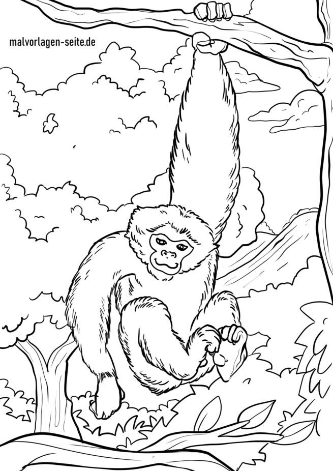 Coloring page gibbon
