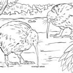 Coloring picture kiwi birds - kiwi animals for coloring