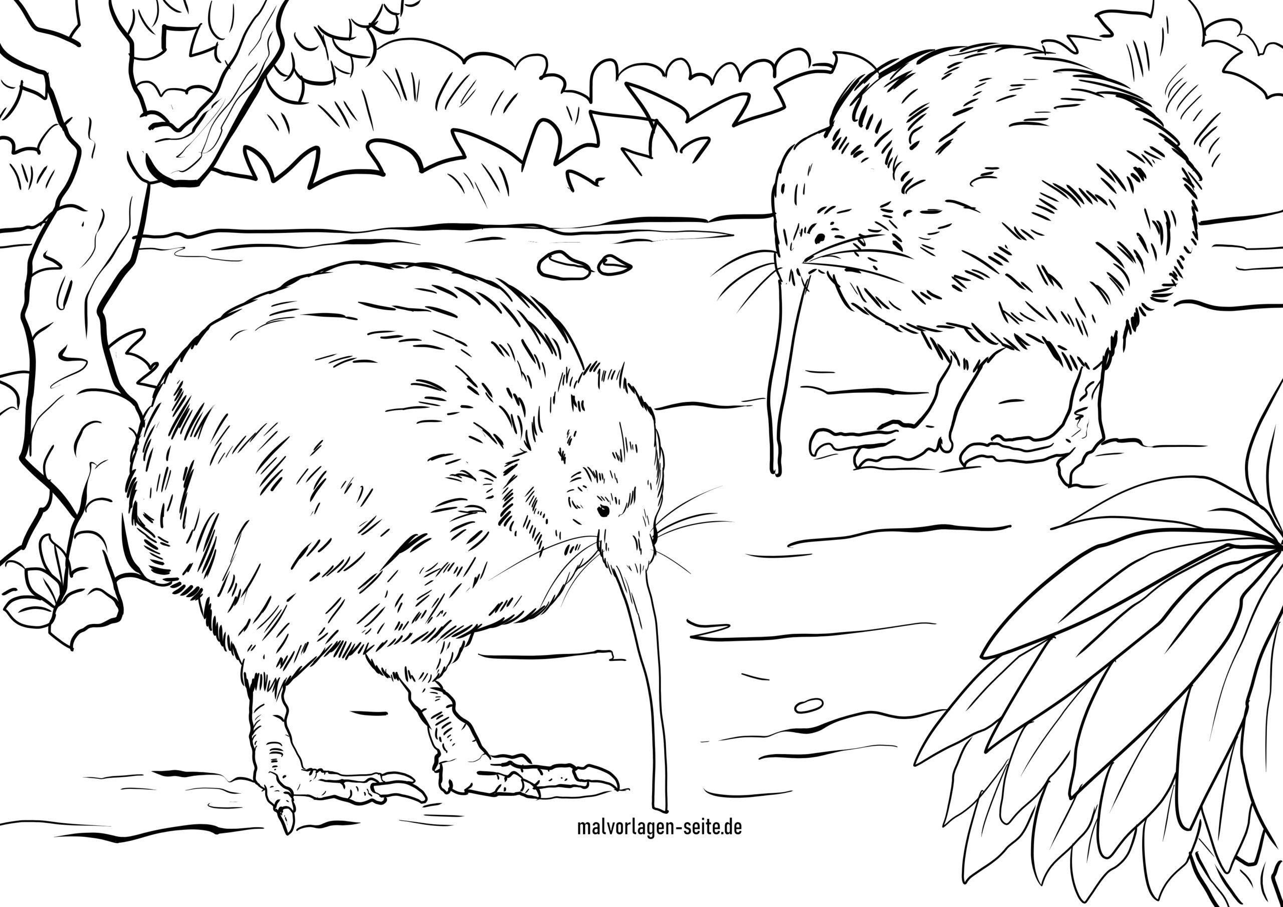 Malvorlage Kiwi  Vögel - Kostenlose Ausmalbilder