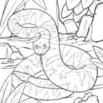 Coloriage serpent / coloriage gratuit