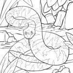 Koloriga paĝo serpento - krotalo