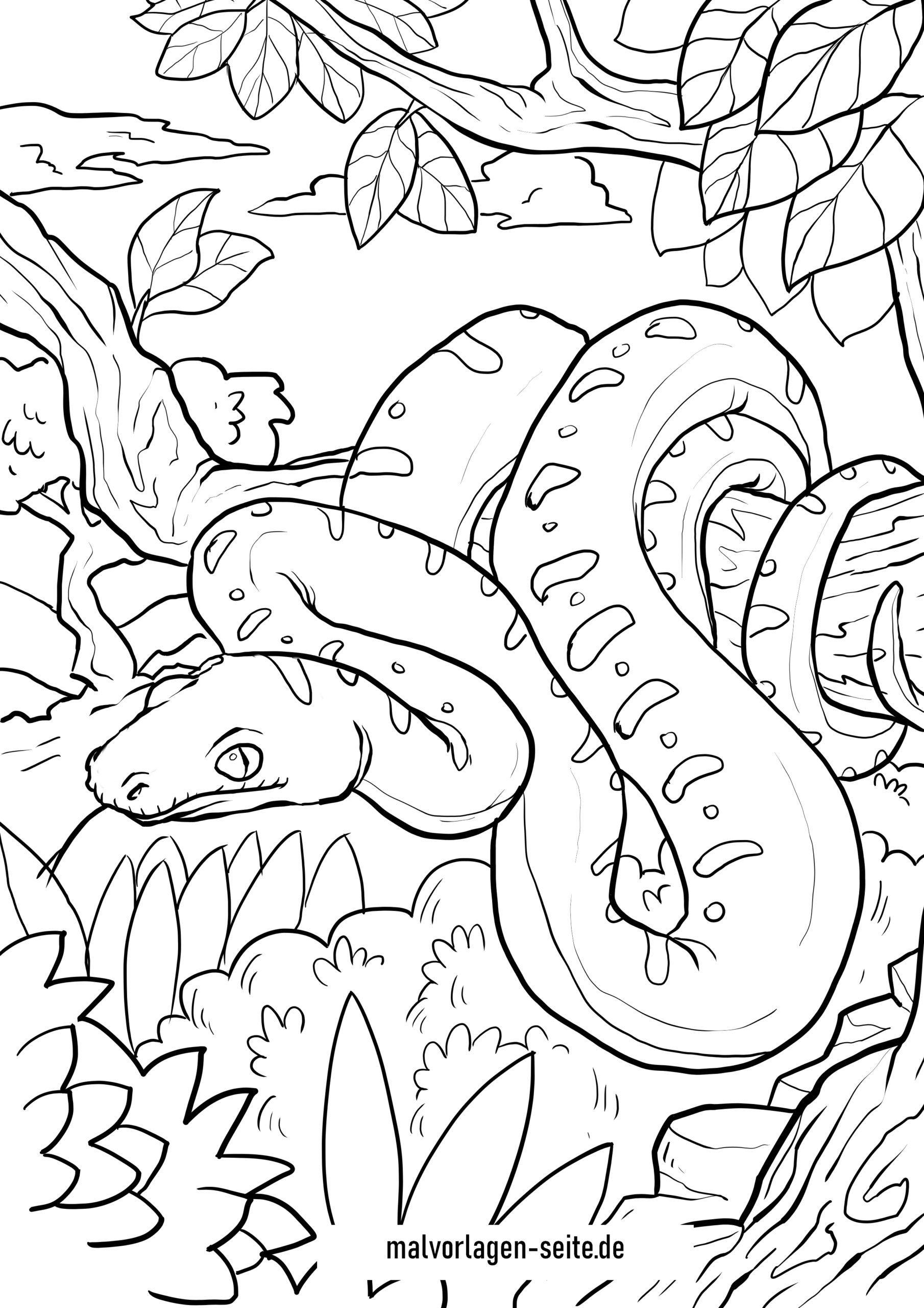Malvorlage Schlange - Würgeschlange - Kostenlose Ausmalbilder