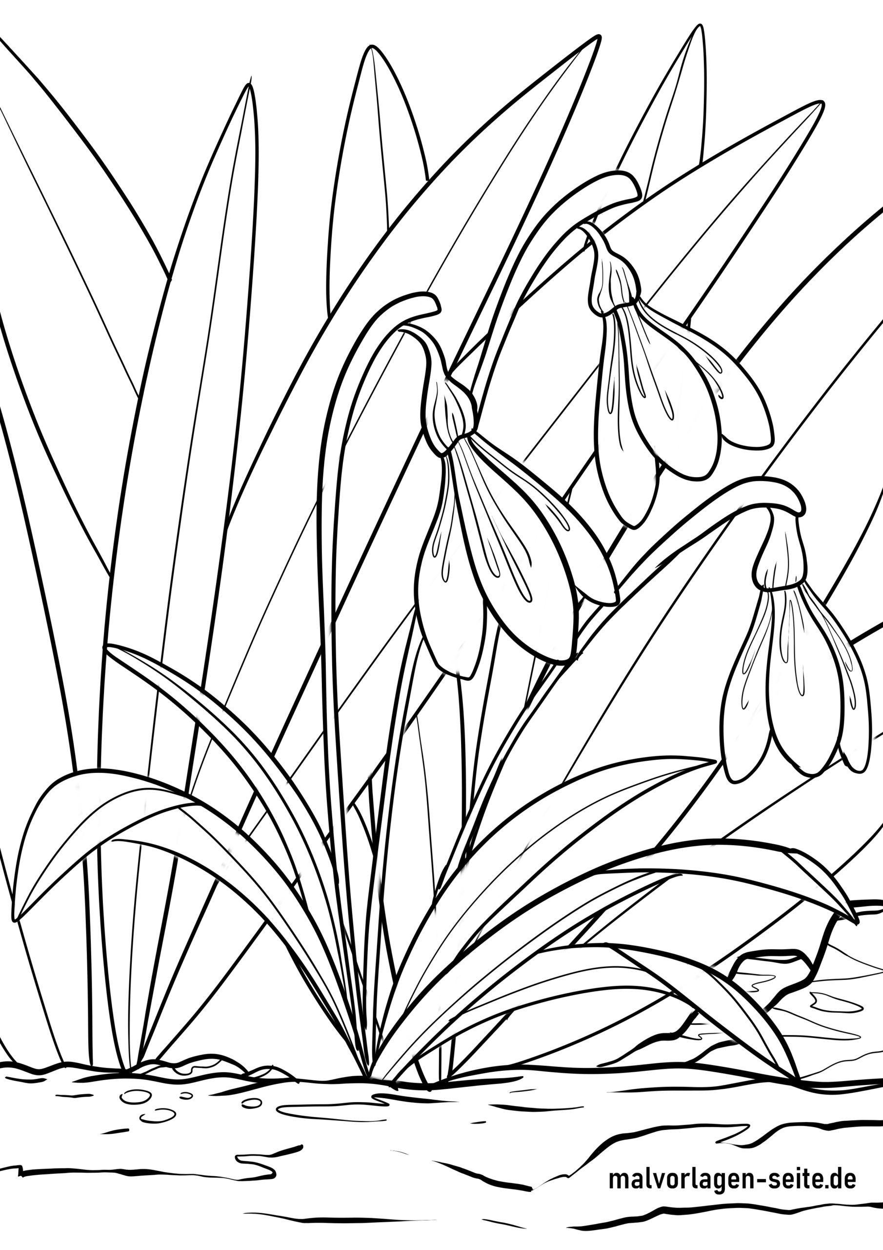 Malvorlage Schneeglöckchen  Pflanzen - Kostenlose Ausmalbilder