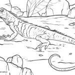 Coloring picture monitor lizard for coloring