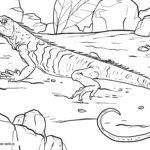 Malvorlage Waran | Tiere Wasser