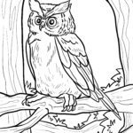 Owl template for coloring