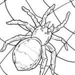 Ausmalbild Spinne zum Ausmalen