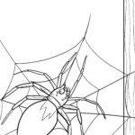 Ausmalbild Spinne mit Spinnennetz zum Ausmalen