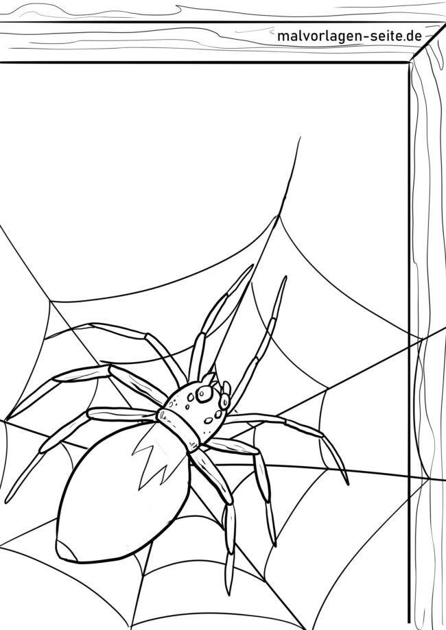 Väritys sivu hämähäkki
