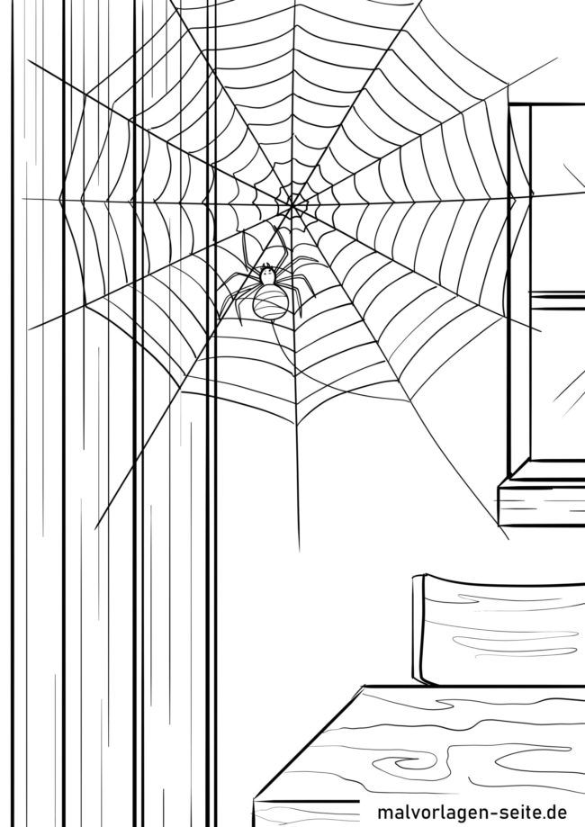 Coloring page spider in the spider web