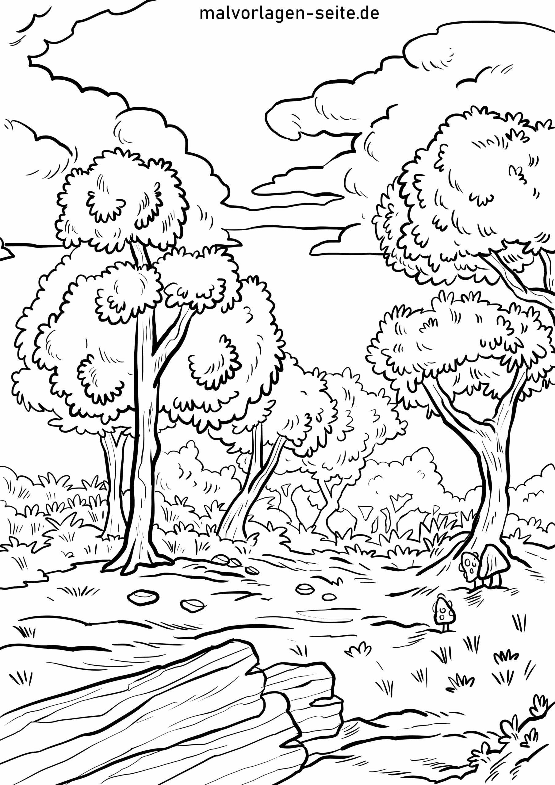 Malvorlage Wald - Kostenlose Ausmalbilder