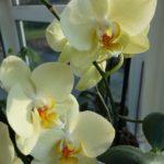Orchideen Pflege | Pflanzen